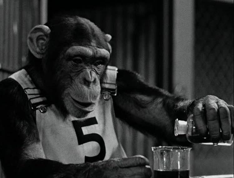モンキー・ビジネス Monkey Business