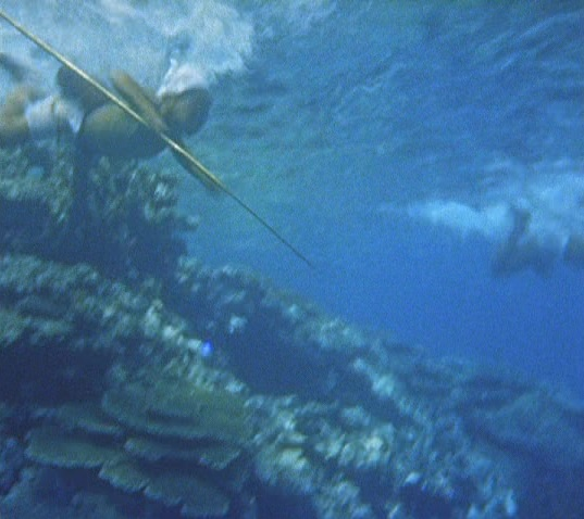 海は生きている(デジタル)