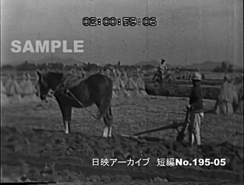 若い村(デジタル)